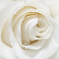 Blomsterdufte