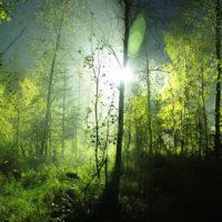Fortryllende Skov