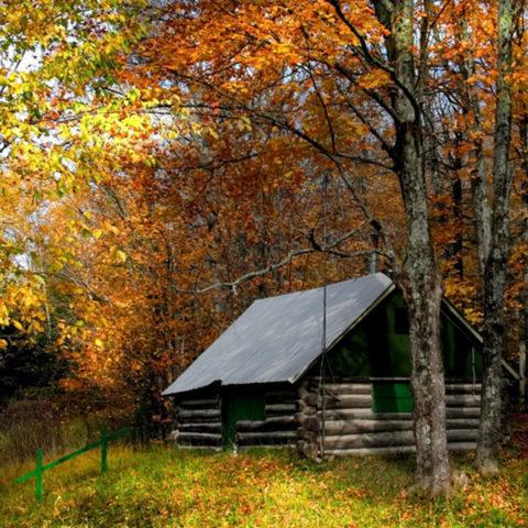 duftvoks, skov, frisk luft, træ, salt