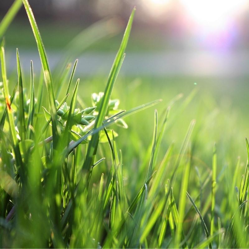 Duftlys med græsduft, sojalys, duftvoks, sojavoks