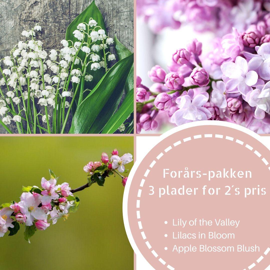 Image of   Forårs-pakken: 3 plader for 2´s pris