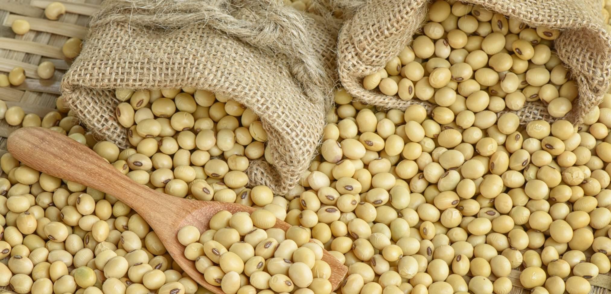 sojabønner voks duftverket