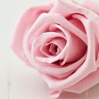 duflys med roser